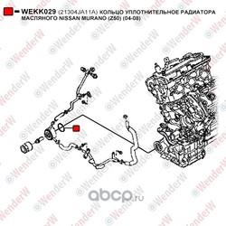 Кольцо уплотнительное радиатора масляного (WenderW) WEKK029